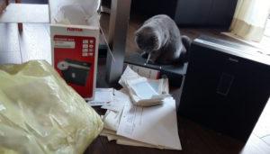 Foto: Katze schaut sich den Wahnsinn des Aktenvernichtens an